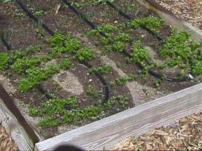 Drip Irrigation Design For Vegetable Garden vegetable garden irrigation system Soaker Hose Design Help
